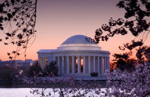 Washington Cherry Blossoms