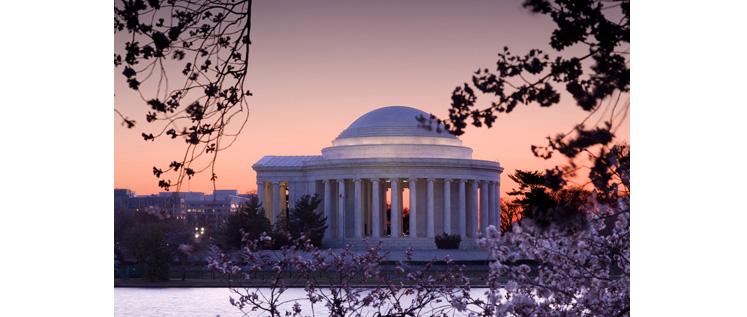 Washington Cherry Blossoms-New